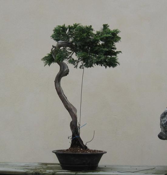 http://www.espritsdegoshin.fr/components/com_agora/img/members/2032/mini_juniperus-rastrera-2014-05-07-006.JPG