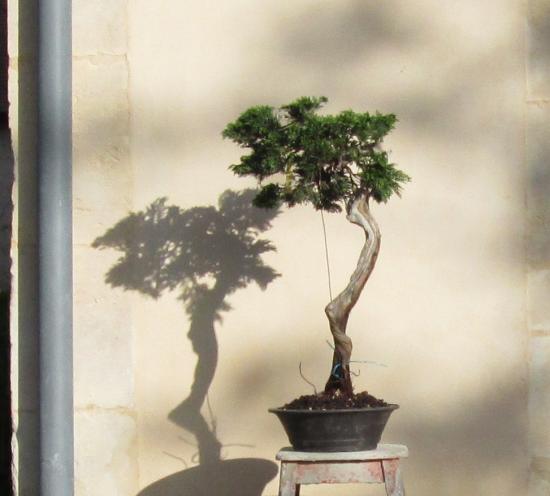 http://www.espritsdegoshin.fr/components/com_agora/img/members/2032/mini_juniperus-rastrera-2014-05-07-008.JPG