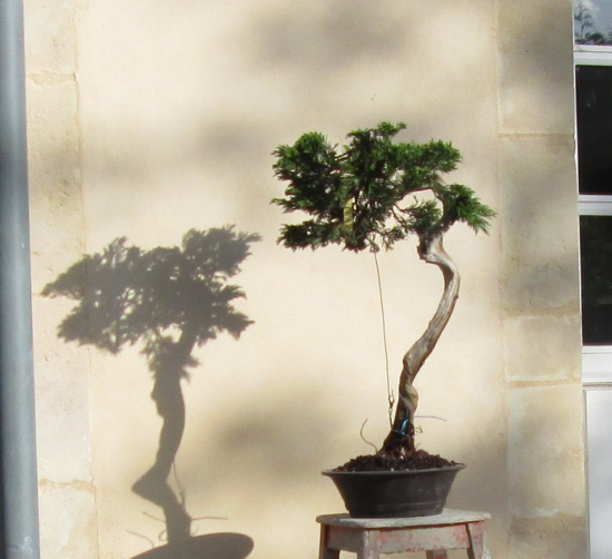 http://www.espritsdegoshin.fr/components/com_agora/img/members/2032/mini_juniperus-rastrera-2014-05-07-010.JPG