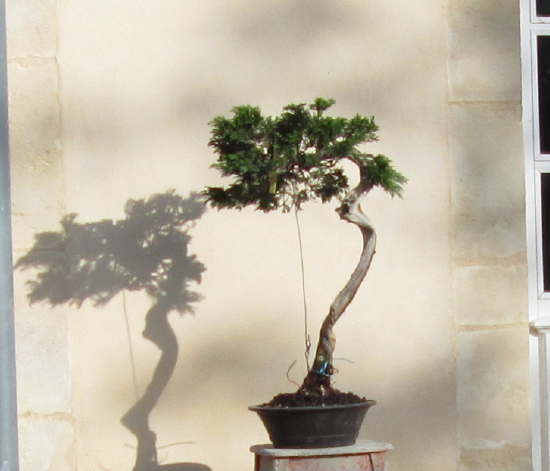http://www.espritsdegoshin.fr/components/com_agora/img/members/2032/mini_juniperus-rastrera-2014-05-07-011.JPG