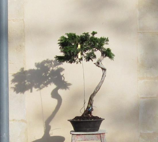 http://www.espritsdegoshin.fr/components/com_agora/img/members/2032/mini_juniperus-rastrera-2014-05-07-012.JPG