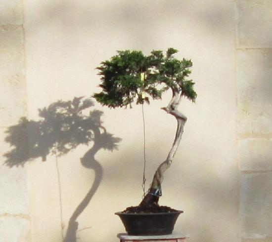 http://www.espritsdegoshin.fr/components/com_agora/img/members/2032/mini_juniperus-rastrera-2014-05-07-014.JPG