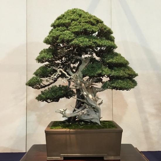 http://www.espritsdegoshin.fr/components/com_agora/img/members/2032/mini_juniperus-rigida-kokufu2021.jpeg