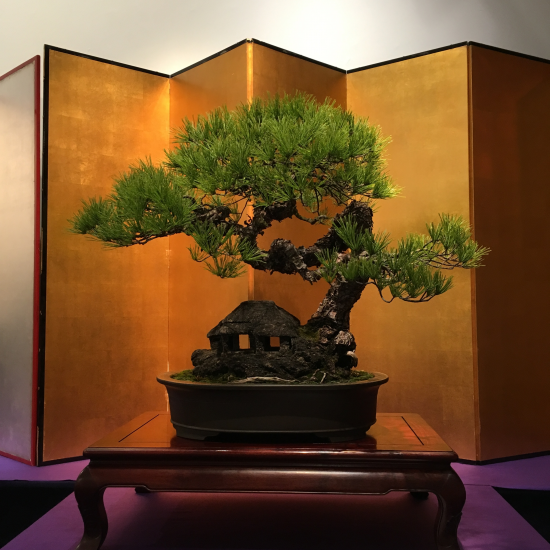 http://www.espritsdegoshin.fr/components/com_agora/img/members/2032/mini_pinus-densiflora-kokufu2021-2.jpeg