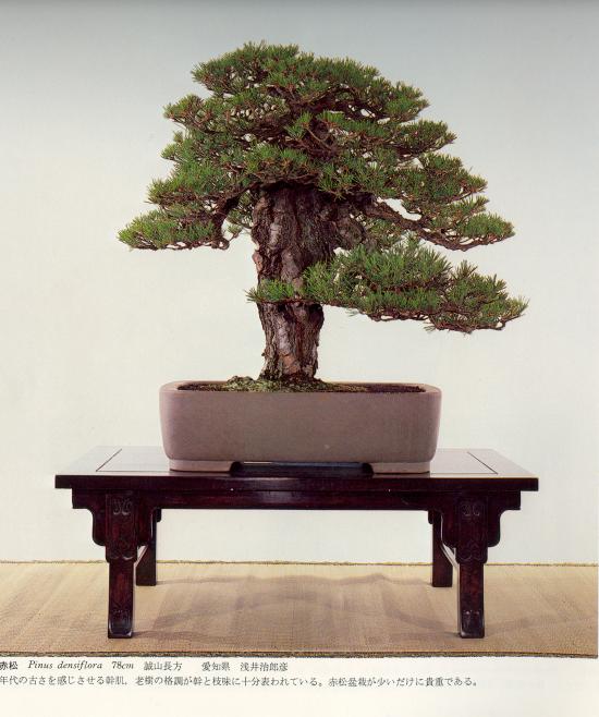 http://www.espritsdegoshin.fr/components/com_agora/img/members/2032/mini_pinus-densiflora-kokufu54-1980.jpg
