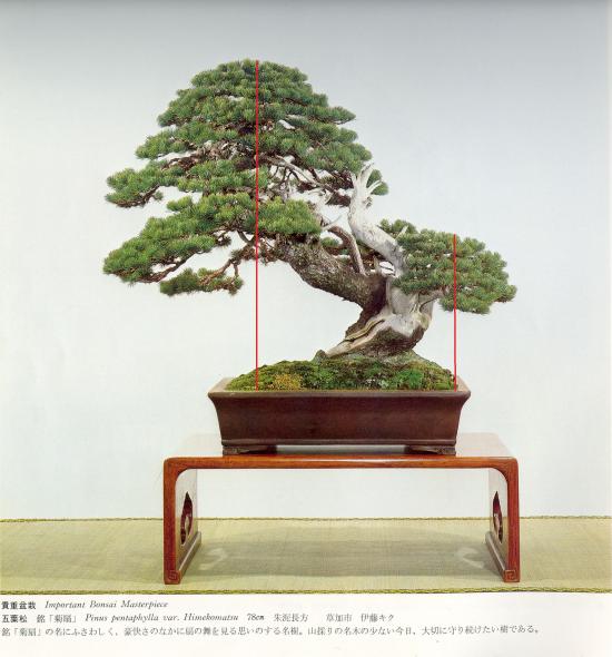 http://www.espritsdegoshin.fr/components/com_agora/img/members/2032/mini_pinus-pentaphylla01-kokufu57-1983virt.jpg