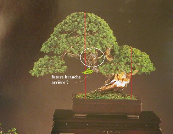 http://www.espritsdegoshin.fr/components/com_agora/img/members/2032/mini_pinus-pentaphylla02-kokufu78-2004virt.jpg