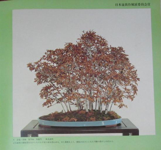 http://www.espritsdegoshin.fr/components/com_agora/img/members/2032/mini_sakufu-ten-2---1977-16.JPG