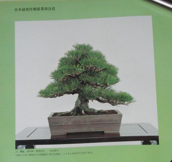 http://www.espritsdegoshin.fr/components/com_agora/img/members/2032/mini_sakufu-ten-2---1977-19.JPG