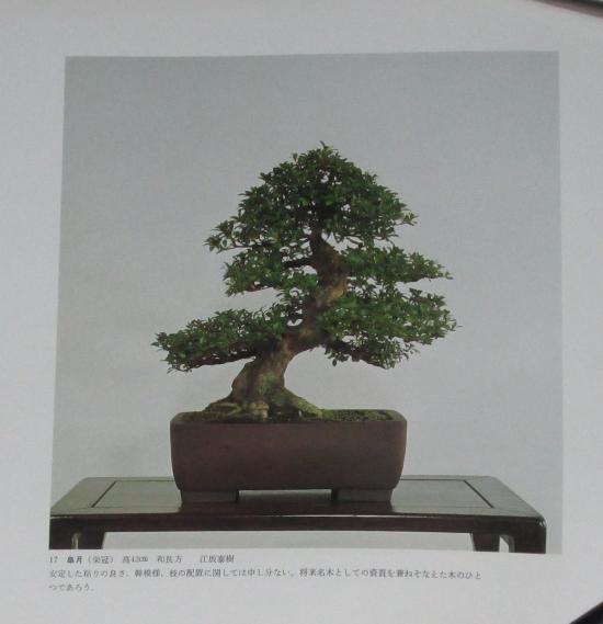 http://www.espritsdegoshin.fr/components/com_agora/img/members/2032/mini_sakufu-ten-2---1977-25.JPG