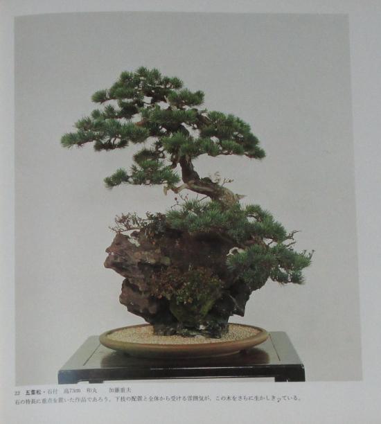 http://www.espritsdegoshin.fr/components/com_agora/img/members/2032/mini_sakufu-ten-2---1977-30.JPG