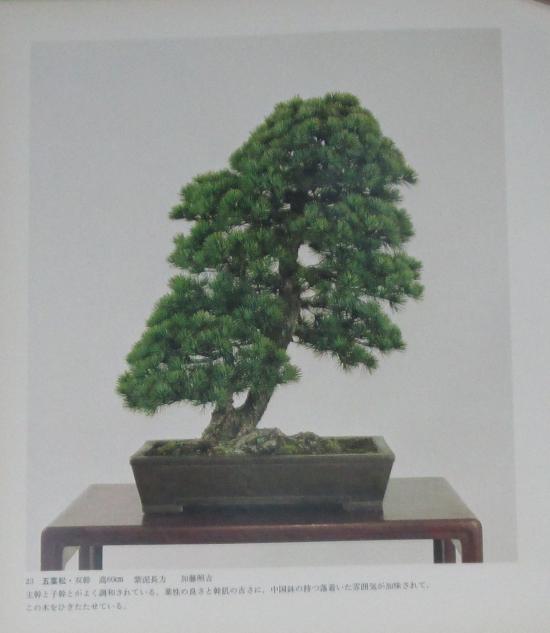 http://www.espritsdegoshin.fr/components/com_agora/img/members/2032/mini_sakufu-ten-2---1977-31.JPG