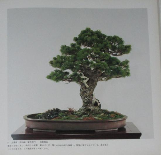 http://www.espritsdegoshin.fr/components/com_agora/img/members/2032/mini_sakufu-ten-2---1977-32.JPG