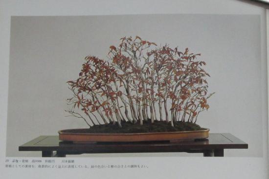 http://www.espritsdegoshin.fr/components/com_agora/img/members/2032/mini_sakufu-ten-2---1977-37.JPG