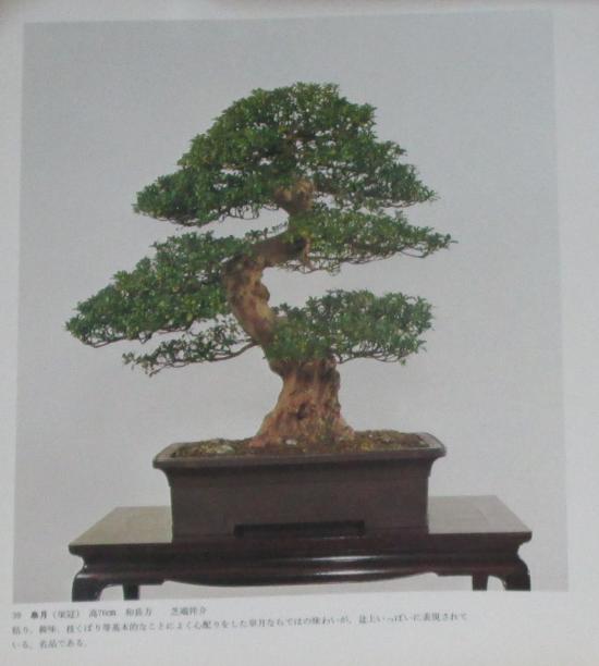 http://www.espritsdegoshin.fr/components/com_agora/img/members/2032/mini_sakufu-ten-2---1977-47.JPG