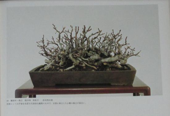 http://www.espritsdegoshin.fr/components/com_agora/img/members/2032/mini_sakufu-ten-2---1977-48.JPG