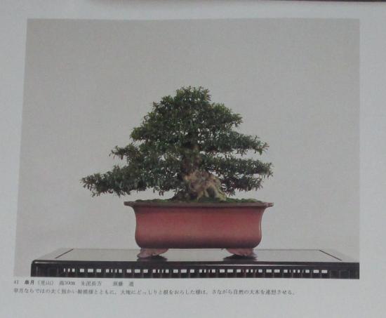 http://www.espritsdegoshin.fr/components/com_agora/img/members/2032/mini_sakufu-ten-2---1977-49.JPG