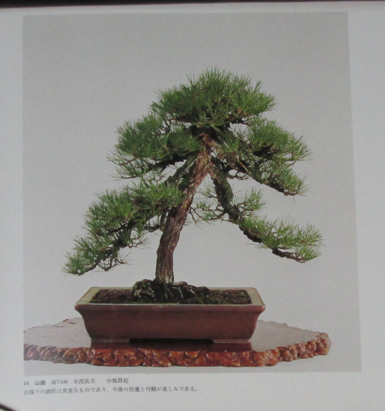 http://www.espritsdegoshin.fr/components/com_agora/img/members/2032/mini_sakufu-ten-2---1977-52.JPG