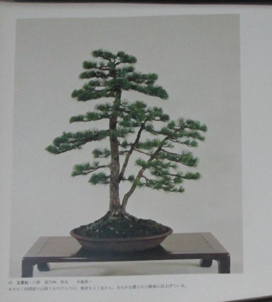 http://www.espritsdegoshin.fr/components/com_agora/img/members/2032/mini_sakufu-ten-2---1977-53.JPG