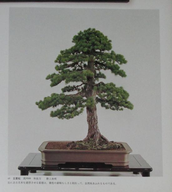 http://www.espritsdegoshin.fr/components/com_agora/img/members/2032/mini_sakufu-ten-2---1977-56.JPG