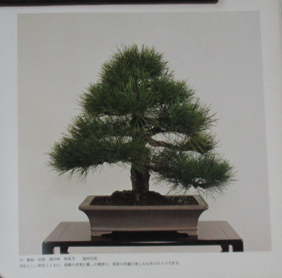 http://www.espritsdegoshin.fr/components/com_agora/img/members/2032/mini_sakufu-ten-2---1977-64.JPG