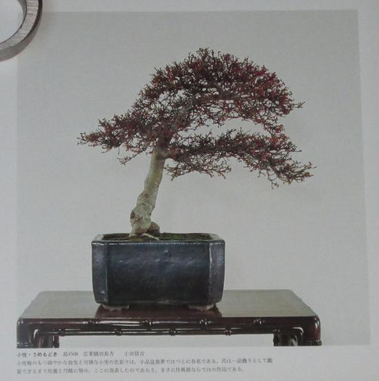 http://www.espritsdegoshin.fr/components/com_agora/img/members/2032/mini_sakufu-ten-2---1977-7.JPG