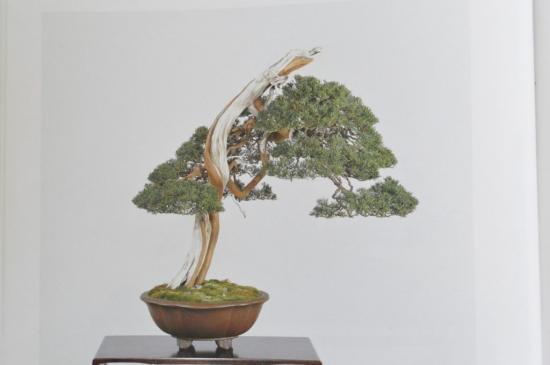 http://www.espritsdegoshin.fr/components/com_agora/img/members/2032/mini_shimpaku-juniper-bonsai-itoigawa-14-1024x681.jpg