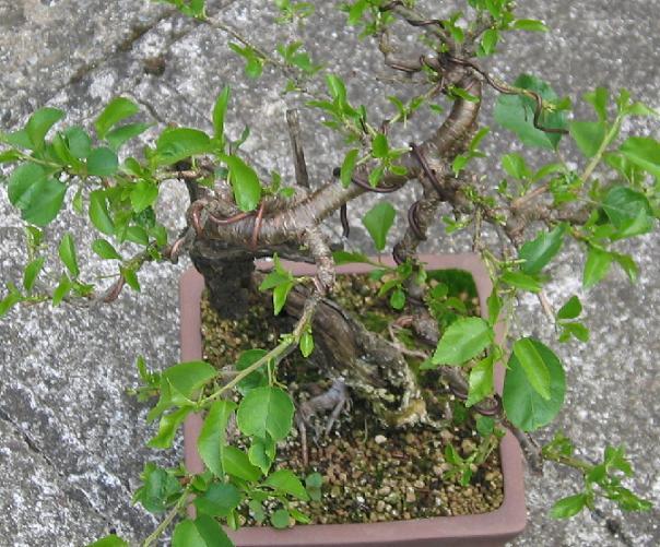 http://www.espritsdegoshin.fr/components/com_agora/img/members/2032/ste-lucie-2010-06-21-002.jpg