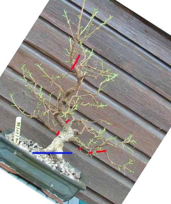http://www.espritsdegoshin.fr/components/com_agora/img/members/2034/mini_07072011-1129_4.jpg