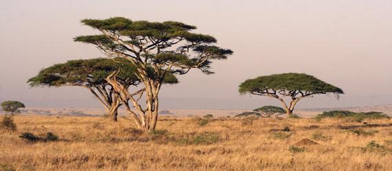 http://www.espritsdegoshin.fr/components/com_agora/img/members/2034/mini_Serengeti-Landscape.jpg