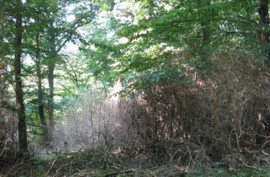 http://www.espritsdegoshin.fr/components/com_agora/img/members/2034/mini_la-foret-de-buis-du-buxberg-de-plusieurs-hectares-est-vraisemblablement-morte-photo-dna.jpg