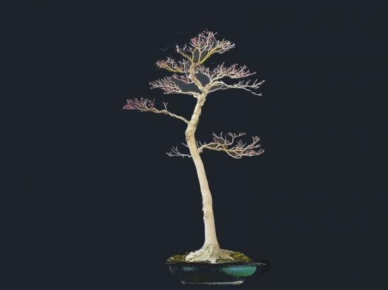 http://www.espritsdegoshin.fr/components/com_agora/img/members/2053/mini_01082012-1118_tree.jpg