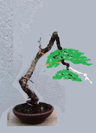 http://www.espritsdegoshin.fr/components/com_agora/img/members/2053/mini_08112013-0652_larix.jpg