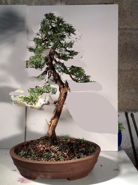 http://www.espritsdegoshin.fr/components/com_agora/img/members/2053/mini_juniperus.jpg