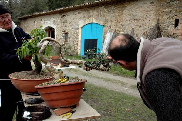 http://www.espritsdegoshin.fr/components/com_agora/img/members/2066/Après-un-très-gros-pliage-sur-le-buis-de-Jean.jpg