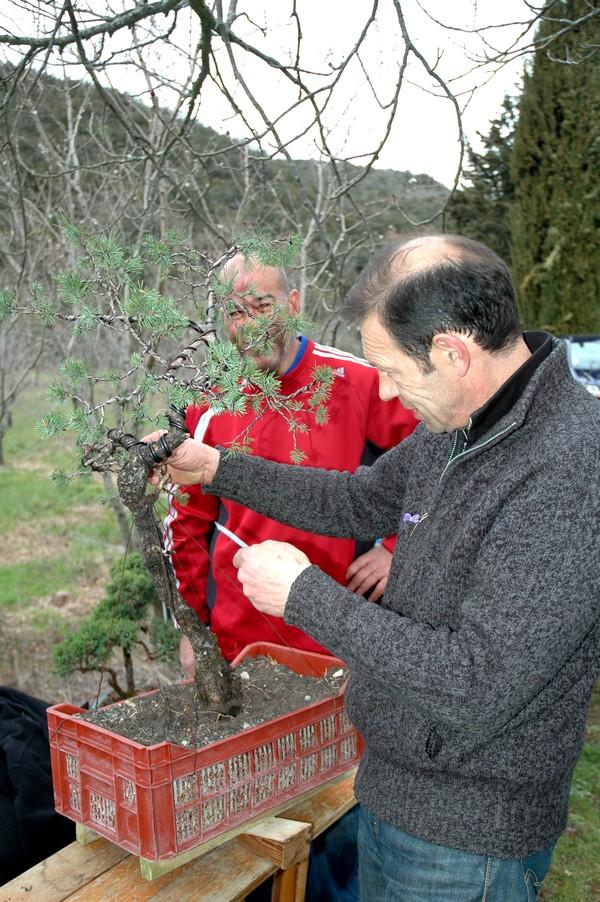 http://www.espritsdegoshin.fr/components/com_agora/img/members/2066/Jean-François-met-en-forme-le-pin-d-Alain.jpg