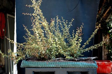 http://www.espritsdegoshin.fr/components/com_agora/img/members/2066/Radeau-pyracantha-Michel-avant-web.jpg