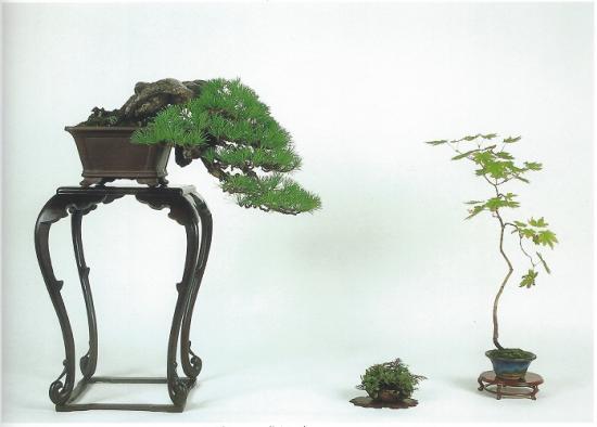 http://www.espritsdegoshin.fr/components/com_agora/img/members/2070/mini_Shita-vers-arbre-secondaire.jpg