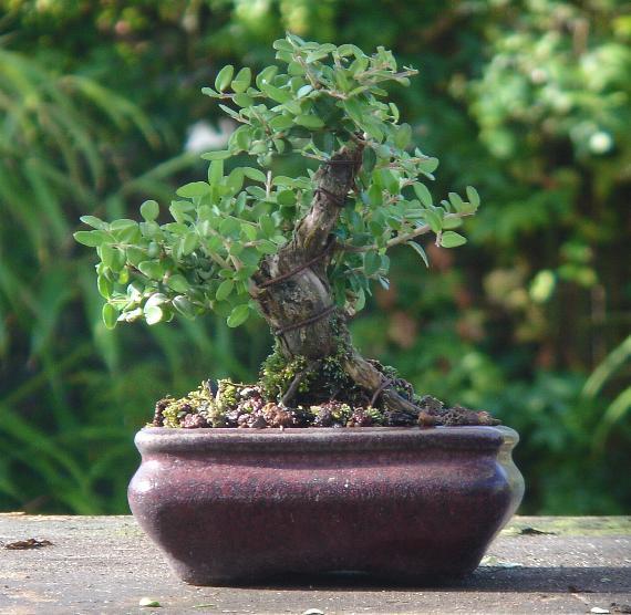 http://www.espritsdegoshin.fr/components/com_agora/img/members/2103/03-01-08-09.jpg