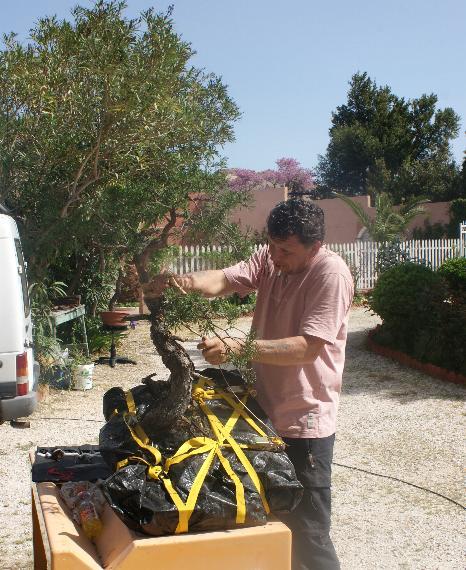 http://www.espritsdegoshin.fr/components/com_agora/img/members/2103/12042011-1647_9.jpg