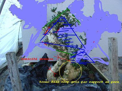 http://www.espritsdegoshin.fr/components/com_agora/img/members/2119/projet-dr-sylvestre1.jpg