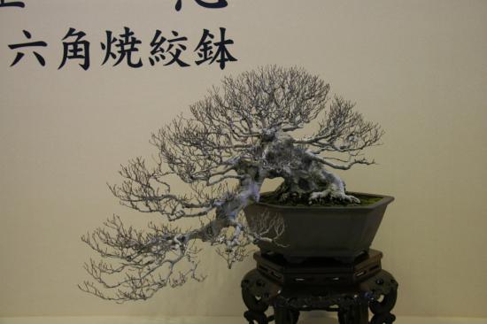 http://www.espritsdegoshin.fr/components/com_agora/img/members/2137/mini_junip-taikan-meifu-ten-2014.jpg