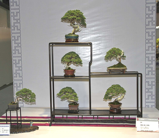 http://www.espritsdegoshin.fr/components/com_agora/img/members/2153/mini_--shohin-bonsai.jpg