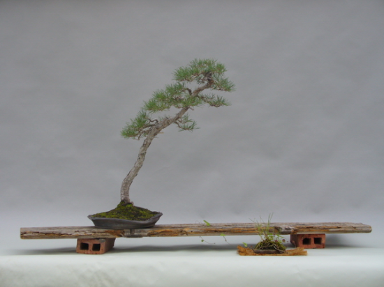 http://www.espritsdegoshin.fr/components/com_agora/img/members/2153/mini_--vn--Pinus-silvestris-Logo.jpg