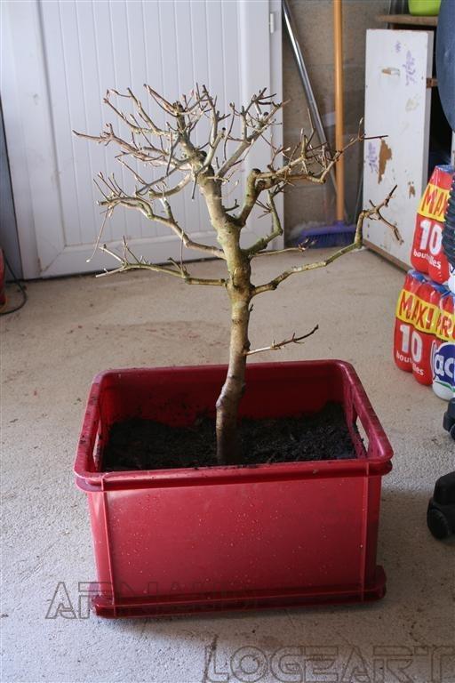 http://www.espritsdegoshin.fr/components/com_agora/img/members/2153/mini_bonsai2-1-002-28Medium29.JPG