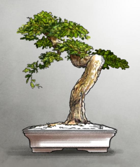 http://www.espritsdegoshin.fr/components/com_agora/img/members/2157/mini_22022010-1450_Quercus-AtelierVirtuel2.jpg