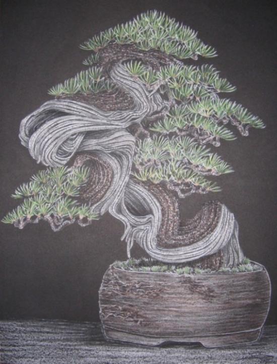 http://www.espritsdegoshin.fr/components/com_agora/img/members/2157/mini_82057-bonsai-082.jpg