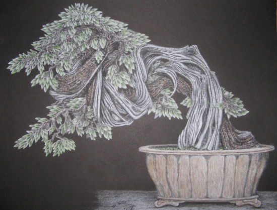 http://www.espritsdegoshin.fr/components/com_agora/img/members/2157/mini_82058-bonsai-083.jpg