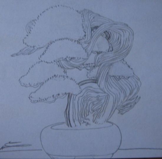 http://www.espritsdegoshin.fr/components/com_agora/img/members/2157/mini_82090-bonsai-544.jpg