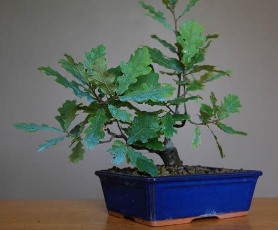 http://www.espritsdegoshin.fr/components/com_agora/img/members/2157/mini_Greg-Quercus-evo2b.jpg